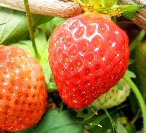 Strawberry0525