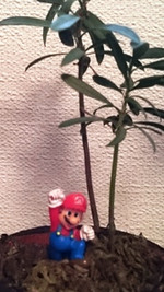 Mario_2