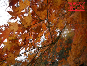 Autumn_leaves1128