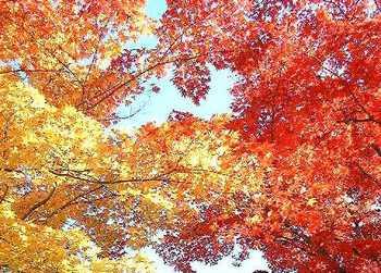 Autumnleaves1109