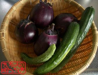 野菜たち収穫!!