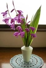 庭の紫蘭を