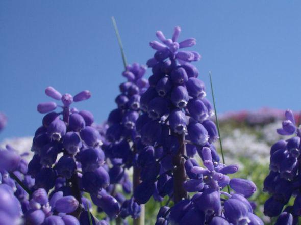 Purple0506_2