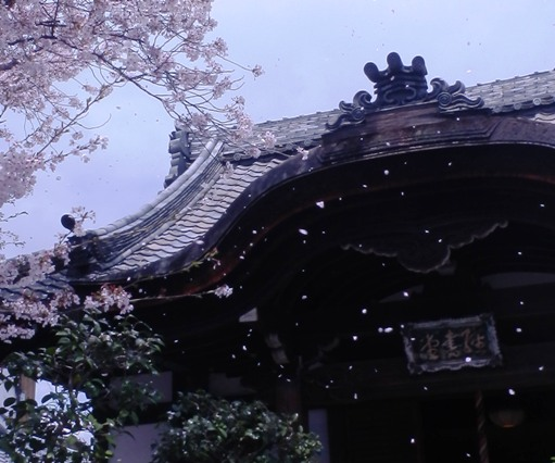 Sakurahubuki